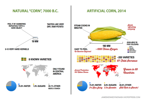 artificial-natural-corn1.0